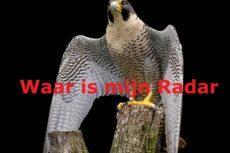 Zijn windmolens illegaal als ze geen vogelradar hebben?